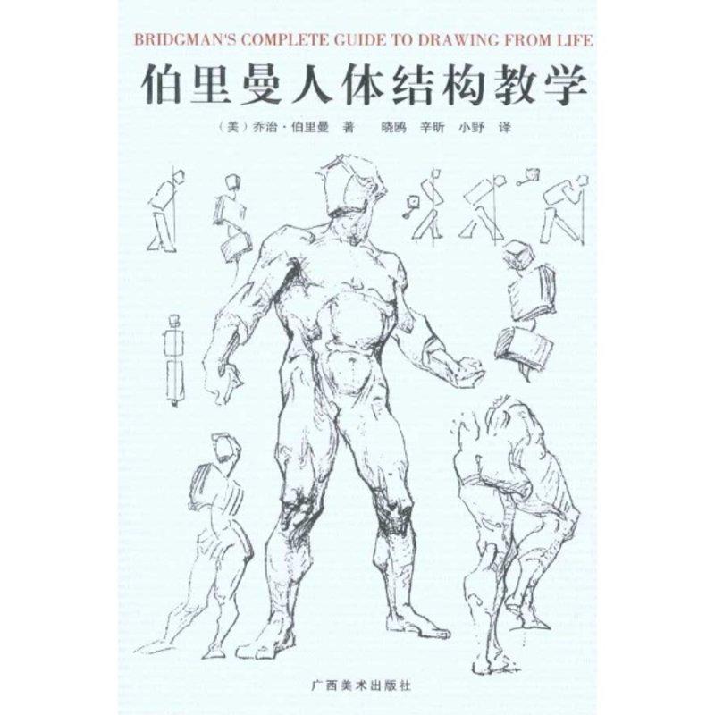 伯里曼人体结构绘画教学null